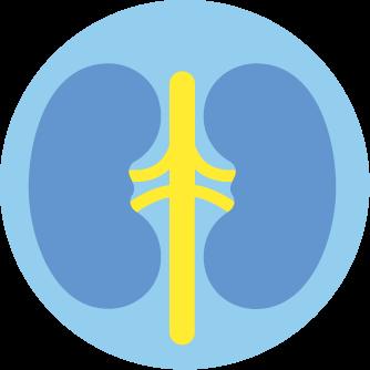 Problemes renaux et urinaires